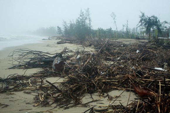 Củi khô bủa vây hơn 10km bờ biển Mỹ Khê, Quảng Ngãi ảnh 1