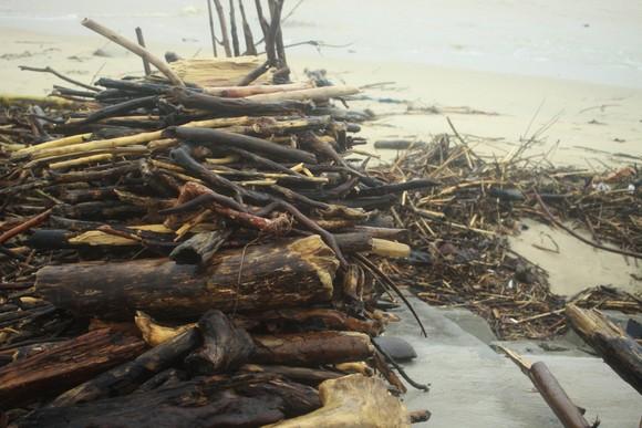 Củi khô bủa vây hơn 10km bờ biển Mỹ Khê, Quảng Ngãi ảnh 12
