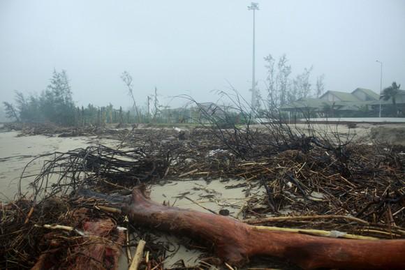 Củi khô bủa vây hơn 10km bờ biển Mỹ Khê, Quảng Ngãi ảnh 5