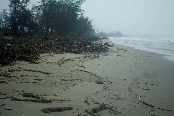 Củi khô bủa vây hơn 10km bờ biển Mỹ Khê, Quảng Ngãi ảnh 2