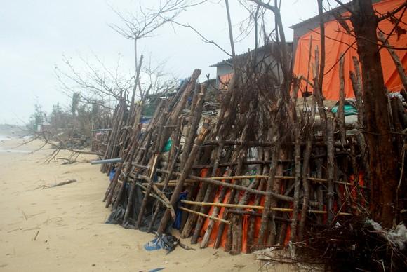 Người dân ven biển Quảng Ngãi cuống cuồng vì sạt lở ảnh 6