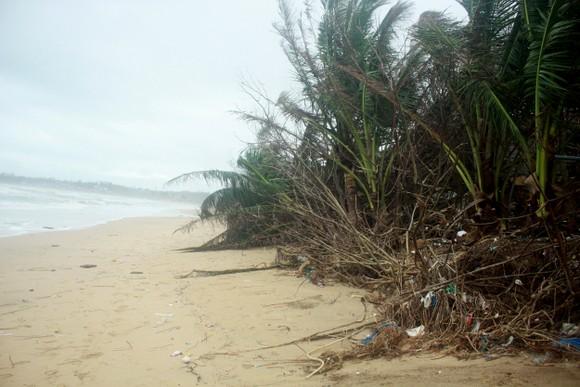 Người dân ven biển Quảng Ngãi cuống cuồng vì sạt lở ảnh 11