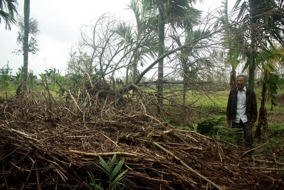 Quảng Ngãi: Nhiều nhà vườn trồng cây ăn trái bị thiệt hại nặng sau mưa bão ảnh 7
