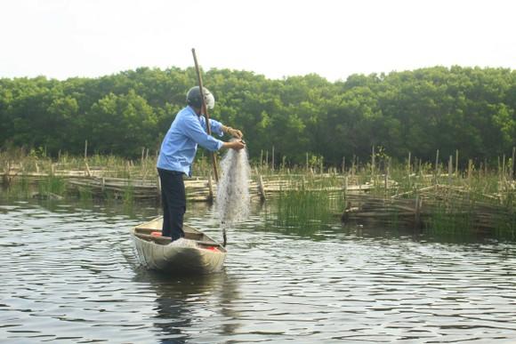 Quảng Ngãi phát triển bền vững các vùng đất ngập nước, bảo tồn rùa biển ảnh 1