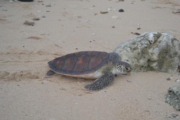 Quảng Ngãi phát triển bền vững các vùng đất ngập nước, bảo tồn rùa biển ảnh 2