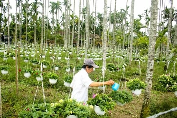 Quảng Ngãi: Rực rỡ 5.000 chậu hoa ngoại nhập của lão nông  ảnh 15