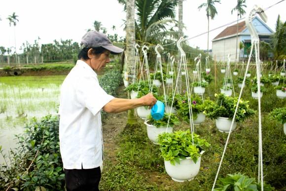 Quảng Ngãi: Rực rỡ 5.000 chậu hoa ngoại nhập của lão nông  ảnh 1