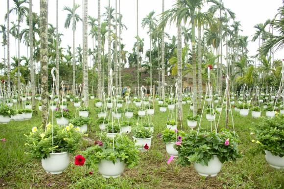 Quảng Ngãi: Rực rỡ 5.000 chậu hoa ngoại nhập của lão nông  ảnh 9