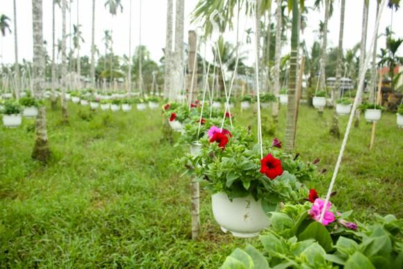 Quảng Ngãi: Rực rỡ 5.000 chậu hoa ngoại nhập của lão nông  ảnh 11