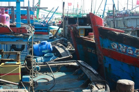 Quảng Ngãi: Hàng trăm tàu cá không thể ra khơi vì luồng lạch bị bồi lấp ảnh 3