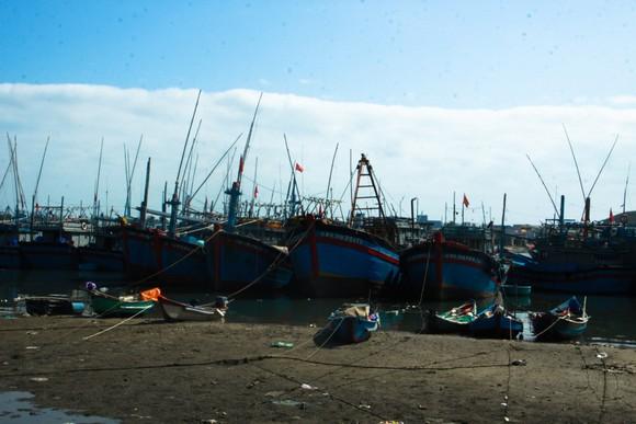 Quảng Ngãi: Hàng trăm tàu cá không thể ra khơi vì luồng lạch bị bồi lấp ảnh 1