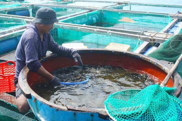 Quảng Ngãi xây dựng chương trình phát triển thủy sản bền vững  ảnh 2