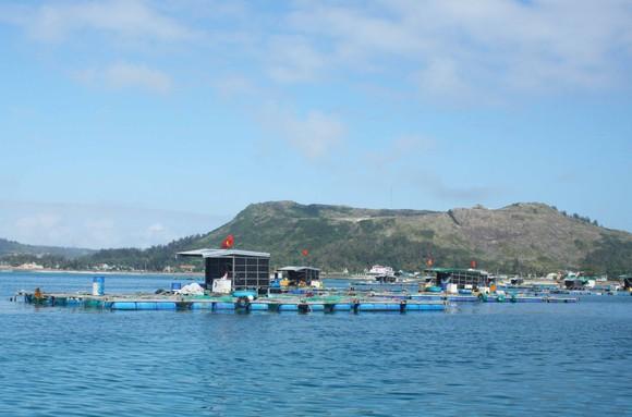 Quảng Ngãi xây dựng chương trình phát triển thủy sản bền vững  ảnh 1
