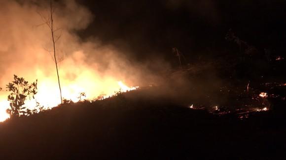 Quảng Ngãi: Liên tiếp xảy ra hai vụ cháy rừng trồng ảnh 1