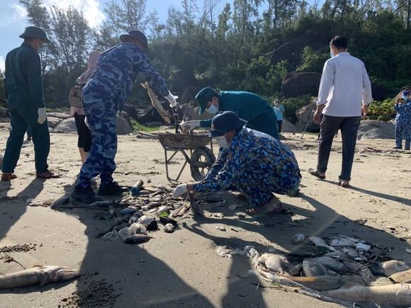 Quảng Ngãi: Chôn lấp hơn 5 tấn cá nuôi lồng bè bị chết sau bão số 5 ảnh 6