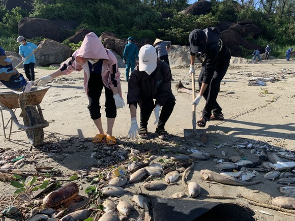Quảng Ngãi: Chôn lấp hơn 5 tấn cá nuôi lồng bè bị chết sau bão số 5 ảnh 8