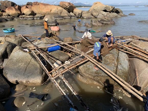 Quảng Ngãi: Chôn lấp hơn 5 tấn cá nuôi lồng bè bị chết sau bão số 5 ảnh 3