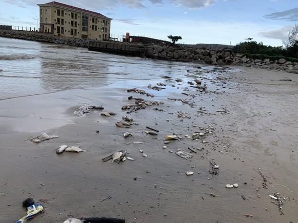 Quảng Ngãi: Chôn lấp hơn 5 tấn cá nuôi lồng bè bị chết sau bão số 5 ảnh 1