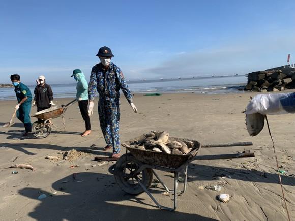 Quảng Ngãi: Chôn lấp hơn 5 tấn cá nuôi lồng bè bị chết sau bão số 5 ảnh 5