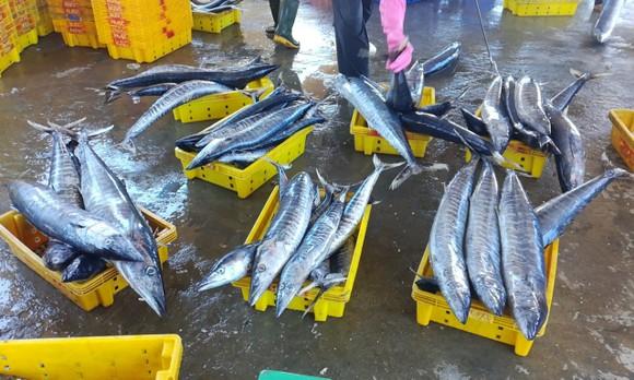 Quảng Ngãi tạm dừng 2 cảng cá, 290 tấn hải sản ứ đọng, đang hư hỏng, bốc mùi ảnh 3