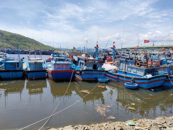 Quảng Ngãi cho phép cảng cá nhà nước hoạt động giải quyết tồn đọng hải sản ảnh 1