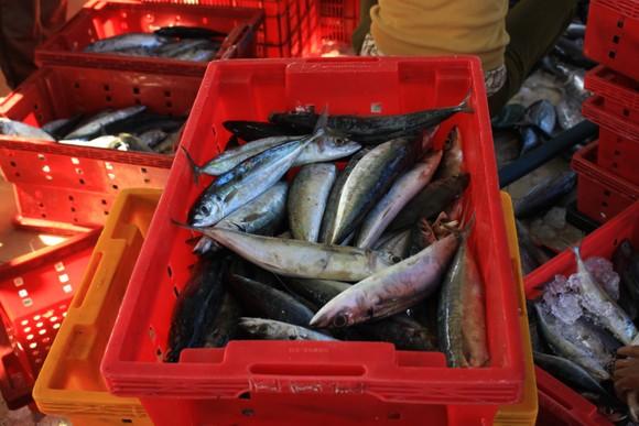 Quảng Ngãi: Nhiều cảng cá mở cửa trở lại, giải quyết hải sản cho ngư dân ảnh 5