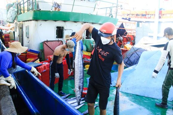 Quảng Ngãi: Nhiều cảng cá mở cửa trở lại, giải quyết hải sản cho ngư dân ảnh 2