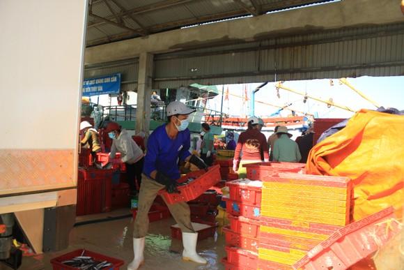 Quảng Ngãi: Nhiều cảng cá mở cửa trở lại, giải quyết hải sản cho ngư dân ảnh 4