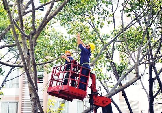 Thiếu phương tiện tỉa cành, cắt nhánh cây trong mùa mưa bão ảnh 1