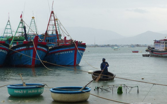 Người nuôi hải sản ở Phú Yên xuất bán tôm hùm trước khi bão số 5 đổ bộ ảnh 1