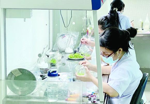 Thu hút chuyên gia, nhà khoa học tại TPHCM: Chính sách ưu đãi về thu nhập chưa đủ sức cạnh tranh ảnh 3