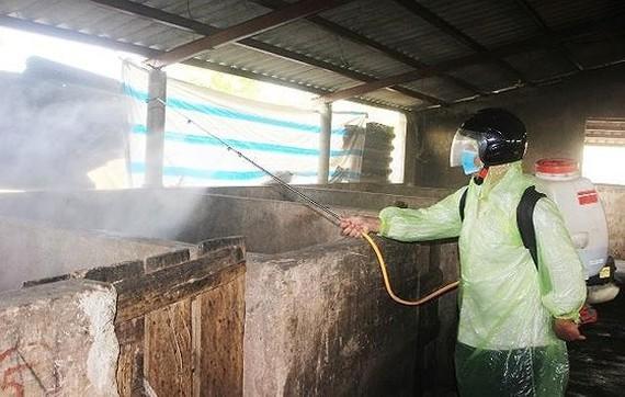 Phun hóa chất khử trùng chuồng trại nuôi heo