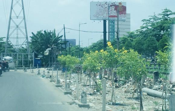 Bãi xà bần đã được thay bằng cây xanh ảnh 1
