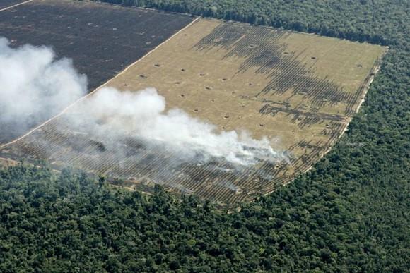 Rừng rậm Amazon bị tàn phá, Brazil, ngày 18-5-2005. Ảnh minh họa: REUTERS