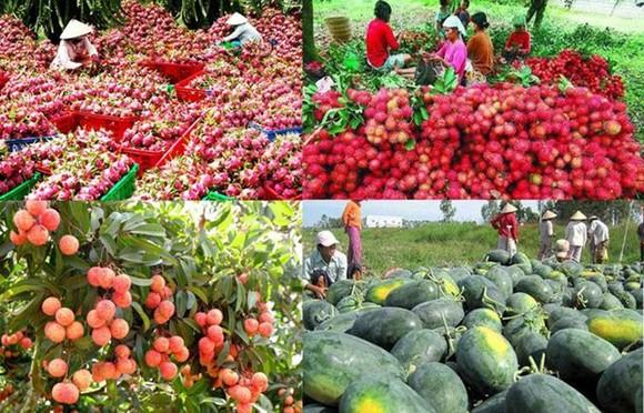 農業與農村發展部:農產品須爭取開發中國市場。