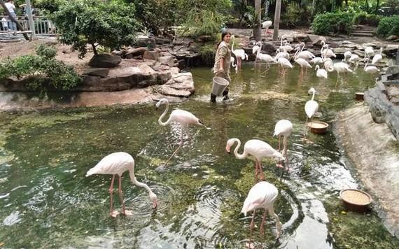 一名動物園工作人員在給白鶴群飼餵。(圖源:TTO)