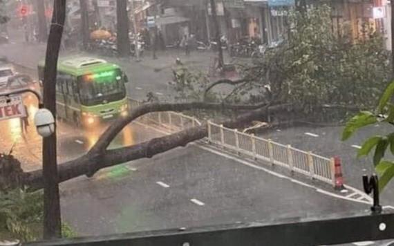 9月25日下午,位於第十郡阮知方街的一棵大樹連根拔起,壓死一名路人。