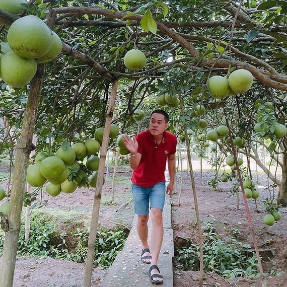 遊客參加同奈省永玖縣的一個柚子園。