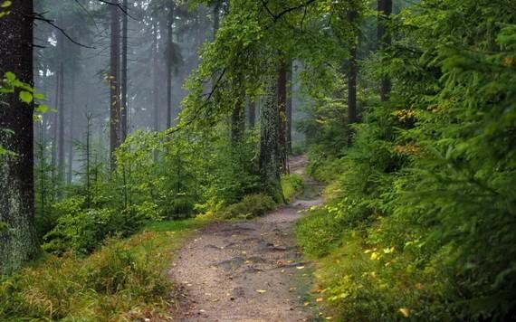 林業作為生態文明建設的主陣地,承擔著保護自然生態系統的大職責。(示意圖源:互聯網)
