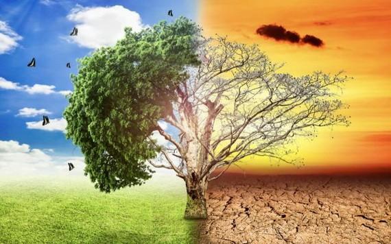 必須立即行動以挽救地球環境。