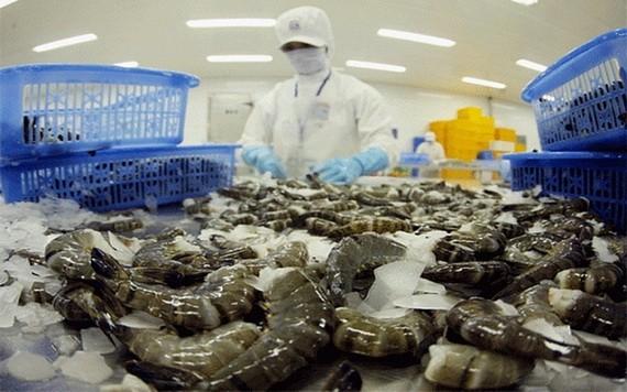 政府採取同步措施使增長達 6%至6.5%。圖為出口黑虎蝦粗加工工段。(圖源:秋莊)
