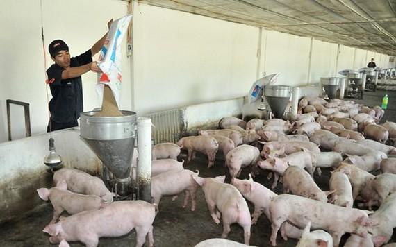 Vissan公司在平陽省投建養豬場一瞥。