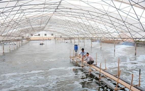 圖為茶榮省一蝦類養殖場。(圖源:互聯網)