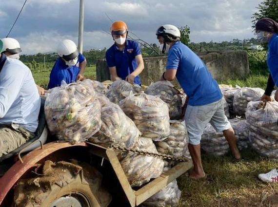 林同省的志願隊收成農產品運到本市。(圖源:黃玉)