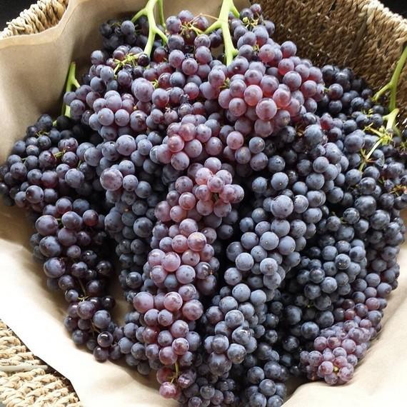 減肥者適合吃什麼葡萄?