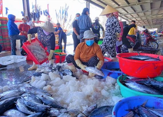 芽莊市熱嶼漁港復業自9月15日起正式復業。(圖源:明戰)