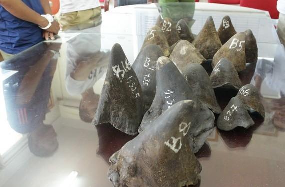 圖為被查獲的一起犀牛角走私案。