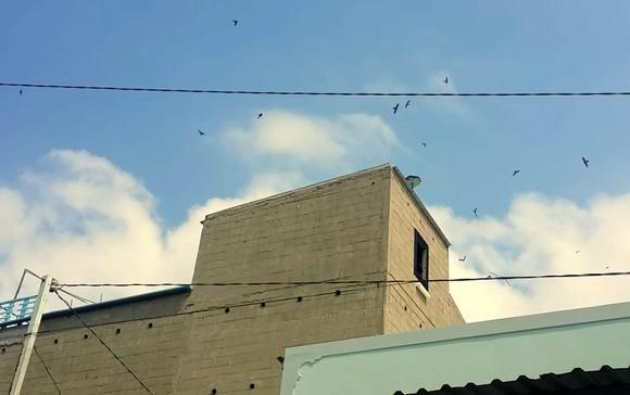 TP Cần Thơ quy định cụ thể khu vực không được chăn nuôi và vùng nuôi chim yến