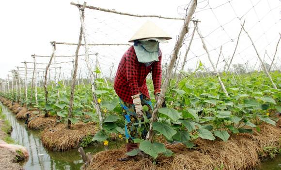 Thủ tướng Nguyễn Xuân Phúc gợi mở nhiều vấn đề phát triển bền vững ĐBSCL ảnh 3