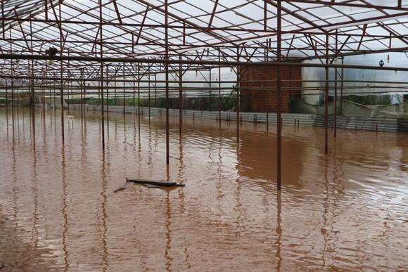 Đà Lạt mưa dữ dội kèm mưa đá, nhiều nơi ngập nặng ảnh 18